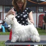 Slezská výstava psů Hlučín