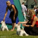 Mezinárodní výstava psů Bratislava, Slovensko