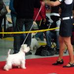 National Dog Show Brno
