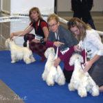 International Dog Show Kielce, Poland