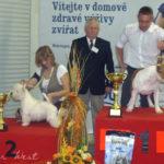 Klubová výstava psů Nitra, Slovensko