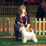 Národní výstava psů Nowa Ruda, Polsko