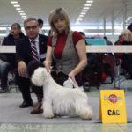 Mezinárodní výstava psů Nitra, Slovensko