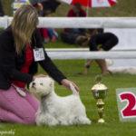 Mezinárodní výstava psů Mladá Boleslav