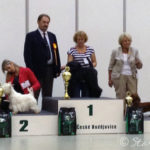 Mezinárodní výstava psů České Budějovice