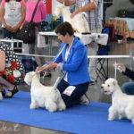 International Dog Show Brno, Czech Republic