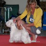 Národní výstava psů Nitra, Slovensko