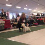 National dog show Zakrzow, Polsko