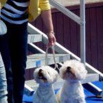 Mezinárodní výstava psů Litoměřice