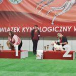 Mezinárodní a národní výstava psů Kielce