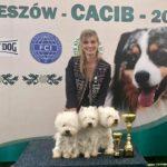International and Hunting dog show Rzeszow Poland