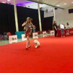 Mezinárodní výstava psů show Nitra Slovensko ,,President Cup''