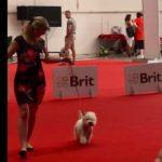 Mezinárodní výstava psů Grand Prix Slovensko