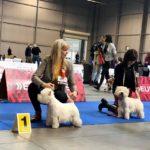 International dog show Double Cacib Prag