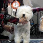 Mezinárodní výstava psů Double Cacib Praha