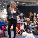 Mezinárodní výstava psů Brno