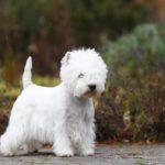 Mezinárodní výstava psů Nitra Slovensko
